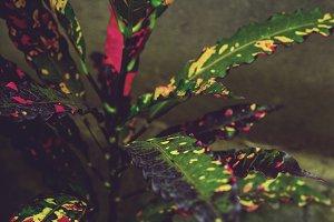 Multicolor Neon Plant