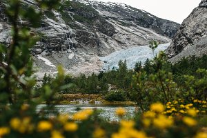 Glacier with Mountains and Flowers