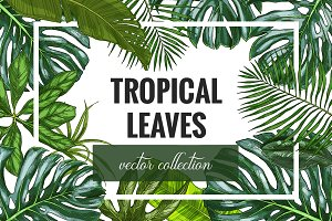 Tropical leaves. Vector collection.