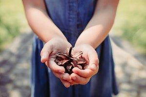Girl hands holding Cedar cone