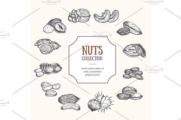 Nuts Package Design Vector