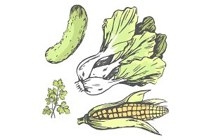 Vegetables at Random Colorful Graphic Illustration