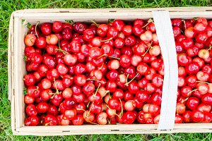 Organic cherries from bio garden