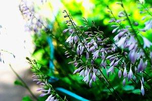 Diagonal vivid flowers bokeh background