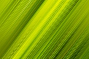 Diagonal palm leaf background