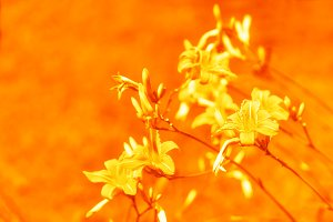 Diagonal orange flowers bokeh background