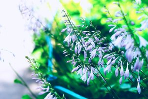 Diagonal purple flowers bokeh background