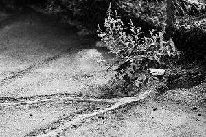 Black and white nature fights asphalt background