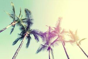Beautiful Palms Sky Nature Tone