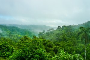 Tropical green forest in Cuba.