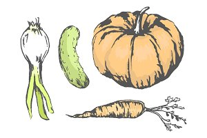 Delicious and Healthy Vegetables Illustrations Set