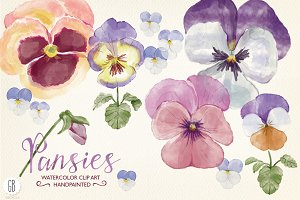Watercolor hand painted pansies