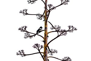 branch of agave flower and bird