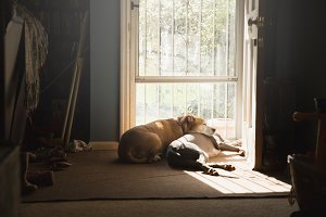 Dogs Laying at Open Door