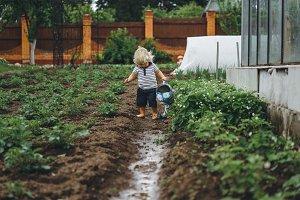 Little boy watering strawberries