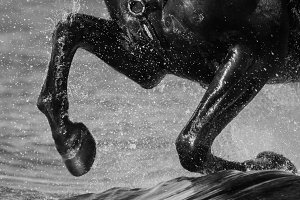 Legs of horse close up with splashes