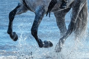Legs of horse close up