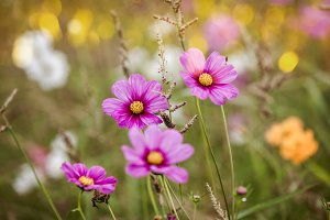 Wildflowers on a meadow