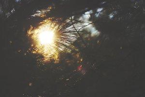 Sun Through the Pines