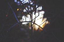 Abstract Sun Through the Trees
