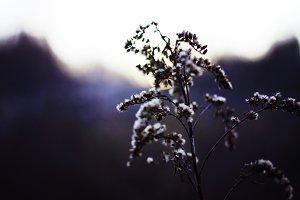Wild Winter Plant