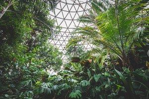 Indoor tropical rainforest