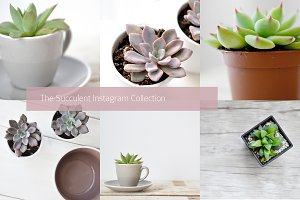 Succulent-Themed Instagram Collectio
