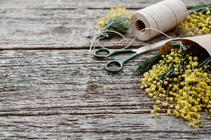 Make bouquet of mimosa. bandages twine and scissors on rustic wooden table