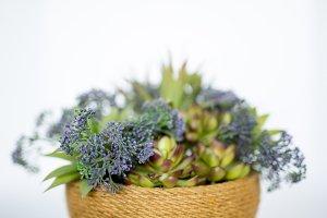 Purple Silk Plant in Woven Basket