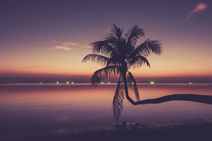 Sunset with a long palm tree over the water and glowing lights from the fishing boats, Thailand