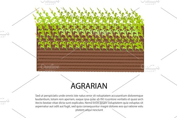 Agrarian Poster with Growing Corn Plants