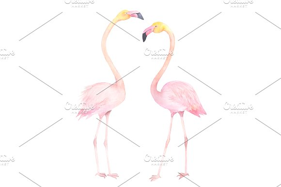 Flamingos Watercolor Illustration