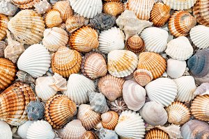 Abstract texture of shells