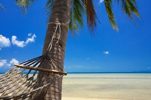 paradise and hammock