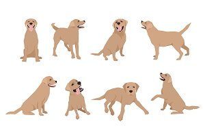 Labrador. Vector set.