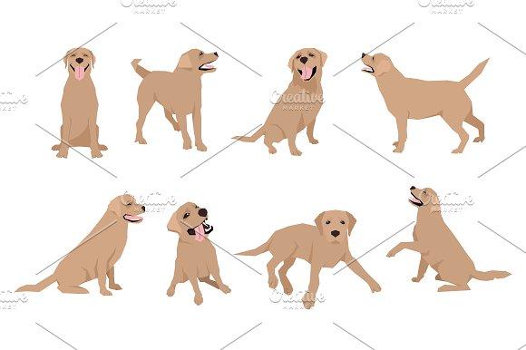 Labrador Vector Set