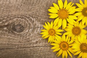 Three sunflowers on old wooden background with copy space for your text. Top view