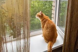Red cat sitting on the windowsill
