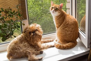 Ginger the cat and the dog