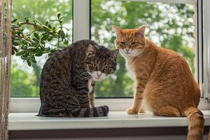 Two beautiful cat n the windowsill