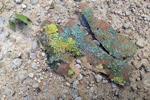 Colourful Mossy Bark