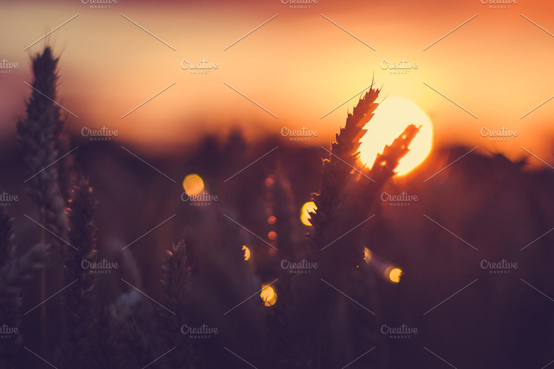Silhouette Of Wheat Ears In Front Of Sun At Sunset Light Natural