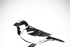 Vector of sparrow design.