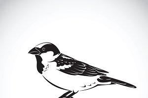 Vector of sparrow design.