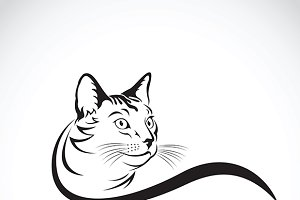 Vector of a cat design. Pet. Animal.