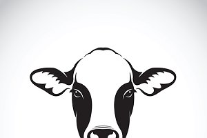 Vector of cow face design. Animal.