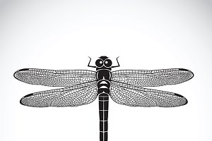 Vector of dragonfly. Insect Animal.