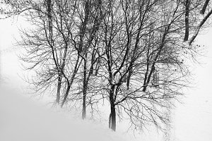 Diagonal black and white winter windowsill with trees background