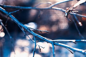Tree branch with light leak background