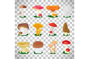 Edible mushrooms on transparent background